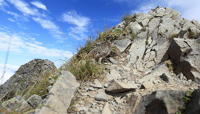 岩場の安全に登る方法