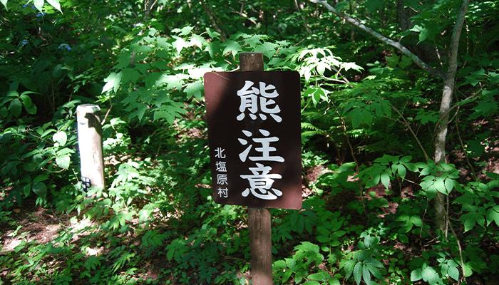登山中に熊に遭わないための回避法とは